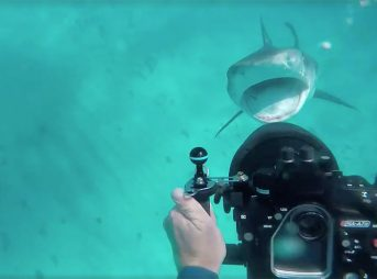Tim Van Beelen came upon a tiger shark feeding on a sea turtle. What the shark did next was incredible.