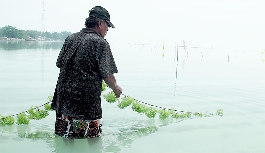 An Indonesian Company Is Creating Biodegradable, Edible Packaging From Seaweed