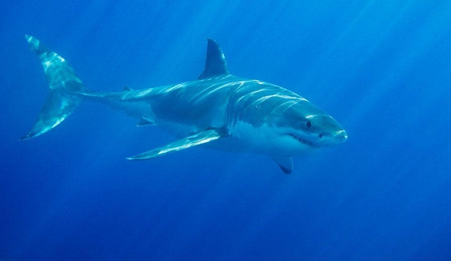 shark attack gracetown - photo #17