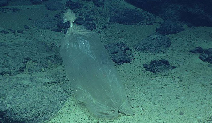 30 Year Observation Of Deep Sea Reveals Just How Bad The