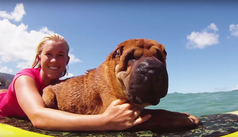 החברה על ארבע: צפו בבת'אני גולשת עם הכלבה שלה
