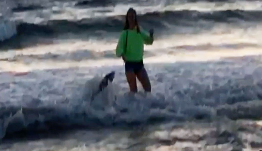 Sea Lion Poisoned with Neurotoxin Attacks Teenage Girl In California; Friend Captures It on Camera