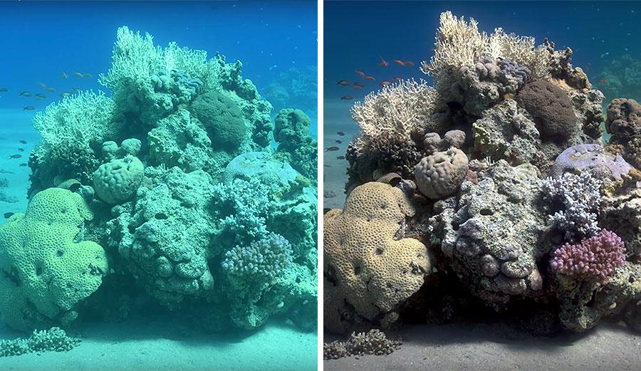 עתיד הצילום: האלגוריתם הבא מנקה את ערפול המים מהתמונה