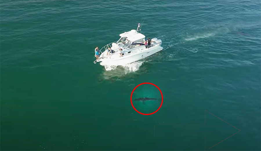 Drone Footage Catches the Moment a Group of Boaters Get Up Close and Personal with a Great White Shark
