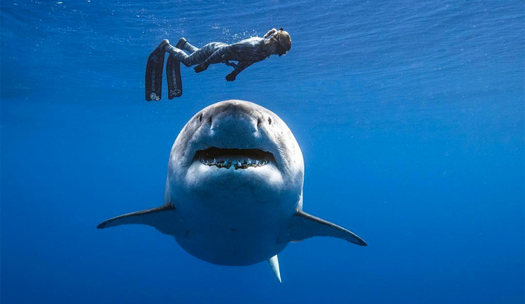 Ocean Ramsey Wants to Teach You Everything She Knows About Sharks and Safety
