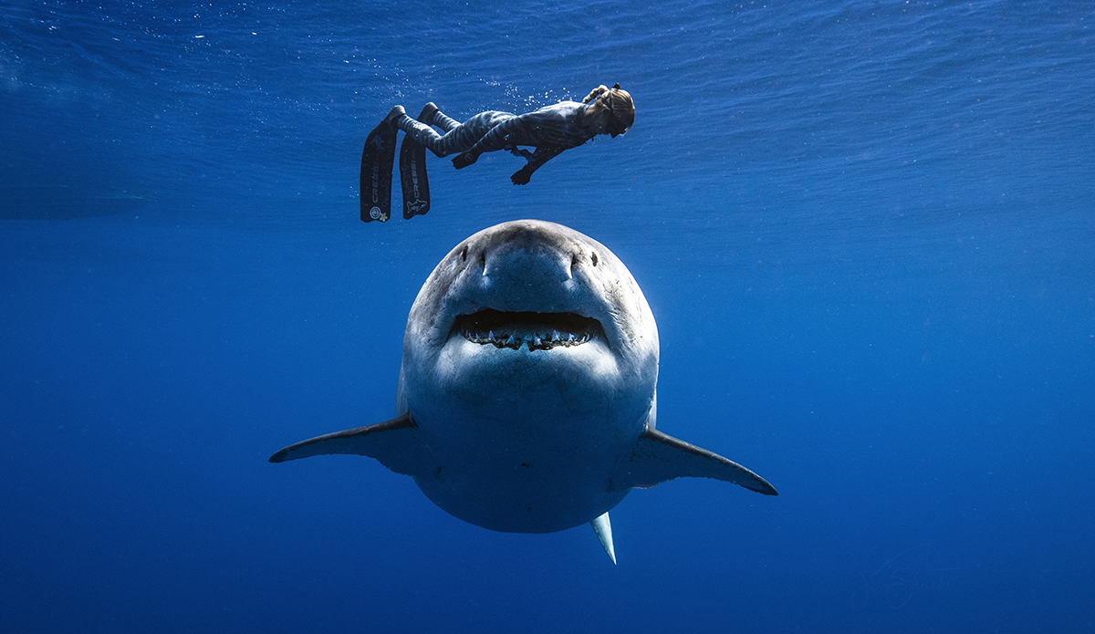 צליל בצלילה: אושן רמזי מתריעה על סכנה מכריש על ידי חיקוי קול דולפין