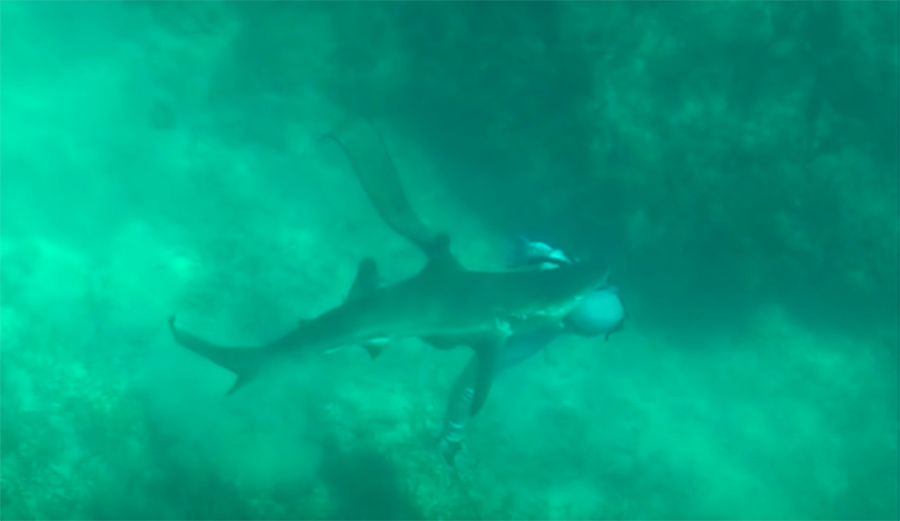 This Spearfisherman Was Nearly Beheaded by a Shark in the Bahamas