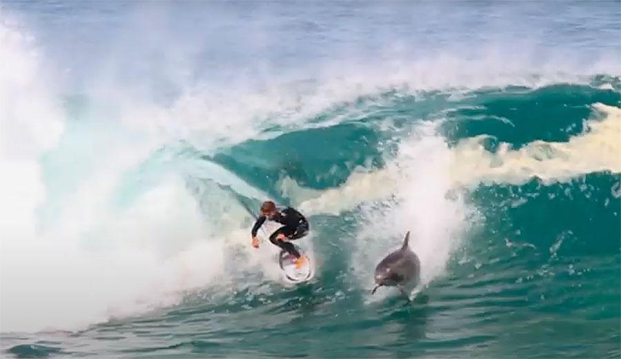 לדולפינים בביירון ביי יש את הזכות הטבעית להפריע לגולשים