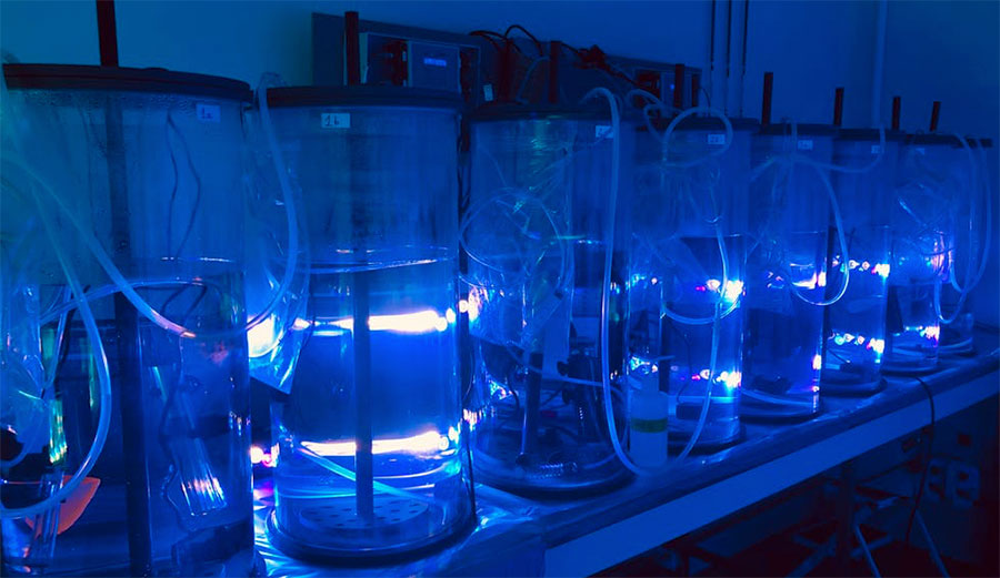 Experiments testing the response of diazotroph cells